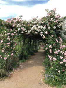 2019年6月3日熊山英国庭園